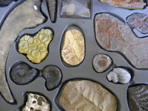 Foto cajita de fosiles Ok
